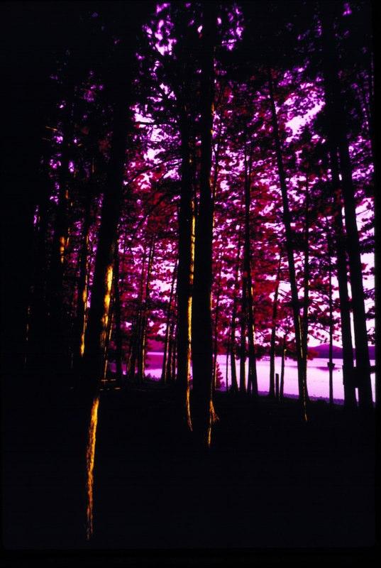 Woods IR 4