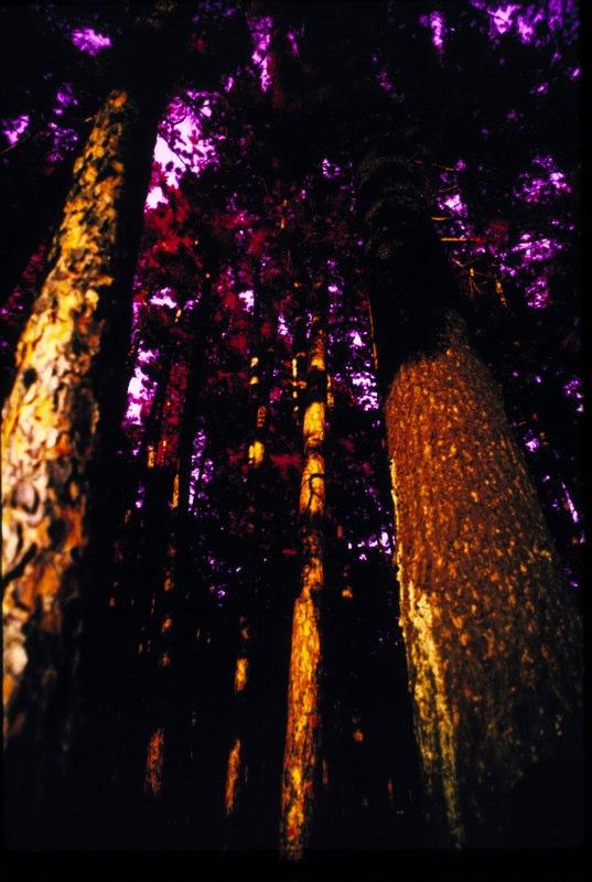 Woods IR 2