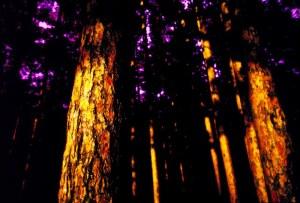 Woods IR 20